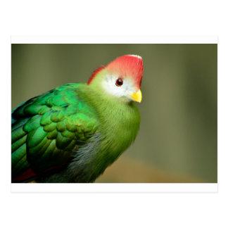 Oiseau exotique carte postale