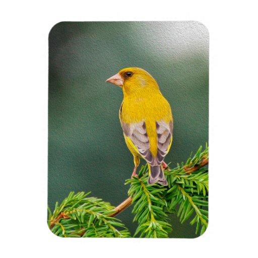 Oiseau jaune sur la branche magnet en vinyle