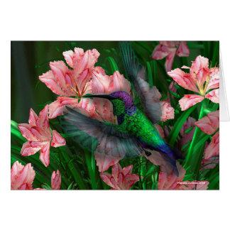 Oiseau mexicain de ronflement de nymphe en bois carte de vœux