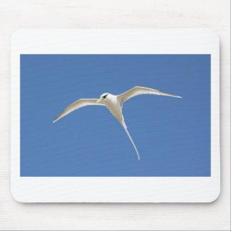 Oiseau Paille en Queue Ile Maurice Tapis De Souris
