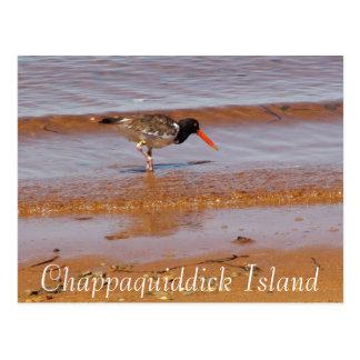 Oiseau rare sur la carte postale d'île de