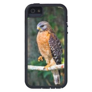 Oiseau Rouge-Épaulé de faucon Coque iPhone 5 Case-Mate