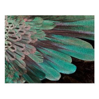 Oiseau superbe des plumes de paradis carte postale