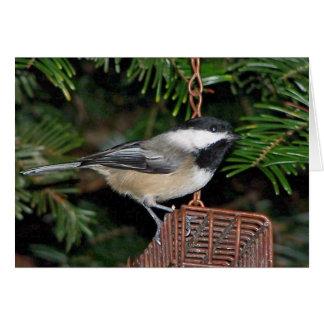 Oiseau sur un Birdfeeder Carte De Vœux