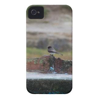 oiseau sur un mur coque iPhone 4