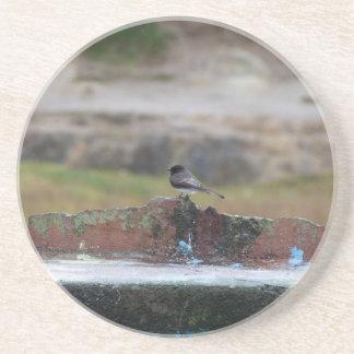 oiseau sur un mur dessous de verre