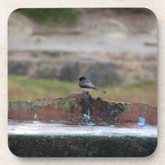 oiseau sur un mur sous-bocks