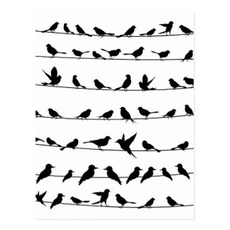 Oiseau sur un wire4 carte postale