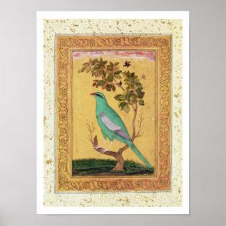 Oiseau vert, Mughal (gouache sur le papier) Affiche