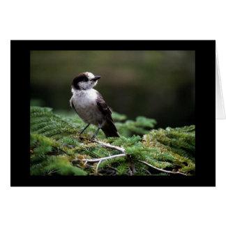 Oiseaux 192 sauvages cartes
