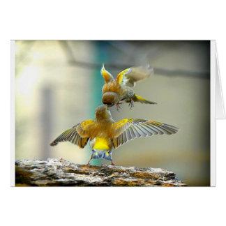 oiseaux affectueux carte de vœux