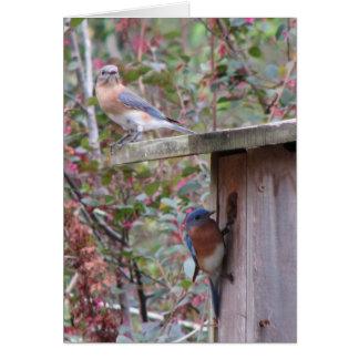 Oiseaux bleus orientaux de ressort carte de vœux