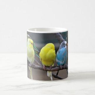 Oiseaux colorés lumineux de perroquets de mug