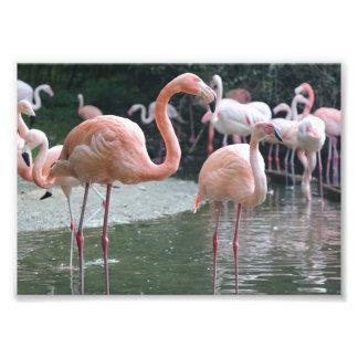 Oiseaux de flamant photographie