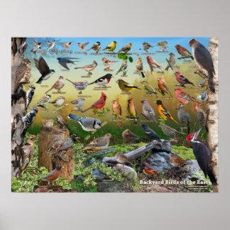 Oiseaux de jardin de l'est poster