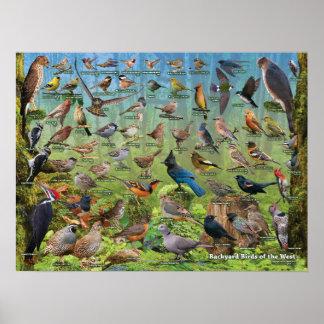 Oiseaux de jardin de l'ouest affiche