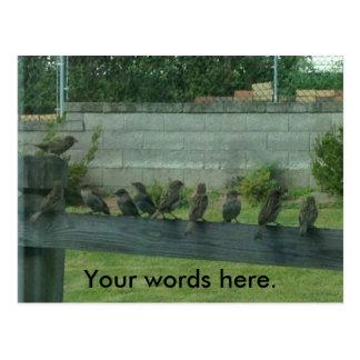 Oiseaux de moineaux sur un rail vos cartes