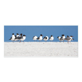 Oiseaux de plage