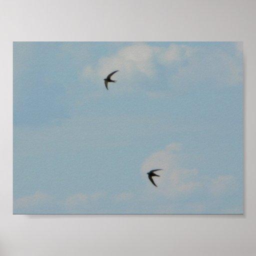 Oiseaux d'hirondelles posters