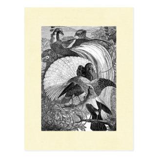 Oiseaux du paradis carte postale