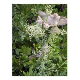 Oiseaux et plantes carte postale