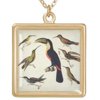 Oiseaux indigènes, y compris le toucan (centre), A Collier Plaqué Or