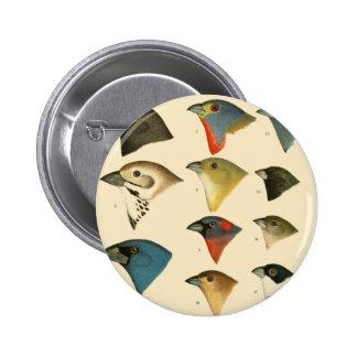 Oiseaux nord-américains pin's