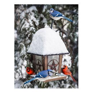 Oiseaux sur le conducteur d'oiseau en hiver carte postale