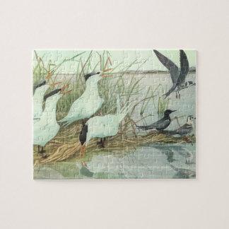 Oiseaux vintages, charadriidés dans un marais par puzzle