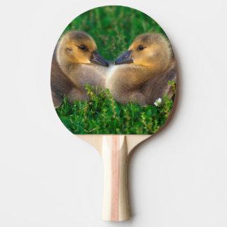 Oisons du Canada qui forment un coeur Raquette Tennis De Table