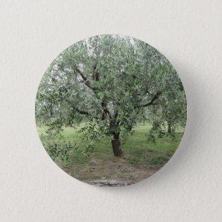 Olivier dans le jardin. La Toscane, Italie Badge