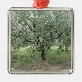 Olivier dans le jardin. La Toscane, Italie Ornement Carré Argenté