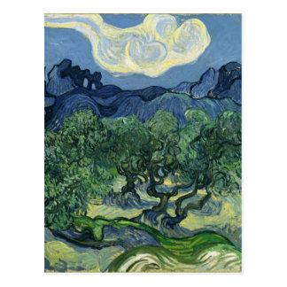 Oliviers par Van Gogh Carte Postale