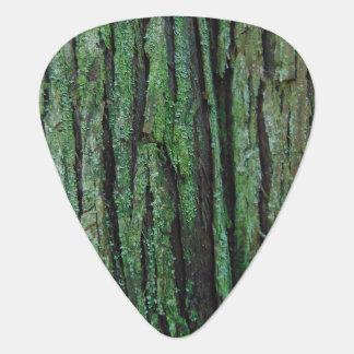 Onglet de guitare d'écorce de cèdre