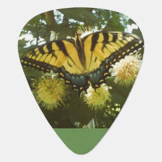 Onglet de guitare jaune de monarque