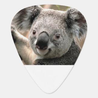 Onglets de guitare de koala