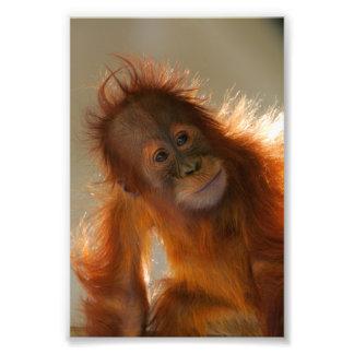 Orang-outan mignon de bébé photo sur toile
