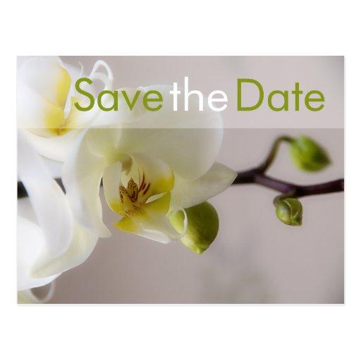 Orchidée blanc • Save-the-Date-Postkarte Carte Postale