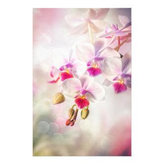 Orchidée blanche photos