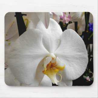 Orchidée blanche tapis de souris