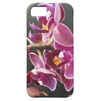 orchidée coque tough iPhone 5