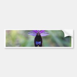 Orchidée d'abeille de Bertolonis (bertolonii Autocollant Pour Voiture
