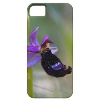 Orchidée d'abeille de Bertolonis (bertolonii Coque iPhone 5 Case-Mate