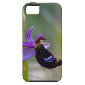 Orchidée d'abeille de Bertolonis (bertolonii Étui iPhone 5