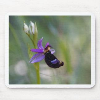 Orchidée d'abeille de Bertolonis (bertolonii Tapis De Souris
