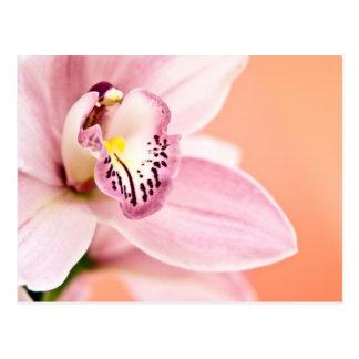 Orchidée de Cymbidium Cartes Postales