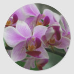 Orchidée de mite