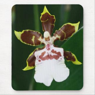 Orchidée de Zygopetalum Tapis De Souris