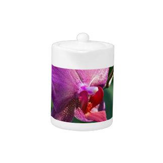 Orchidée magique