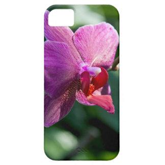Orchidée magique coque iPhone 5